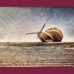 Slow communication: tutto si può comunicare, senza fretta