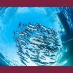 Swimme: la tua pagina Facebook ottimizzata per Google